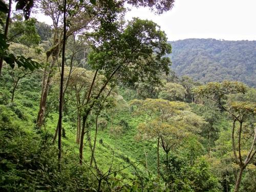 7ba Hillside, Nyungwe Park, Rwanda:enclos*ure
