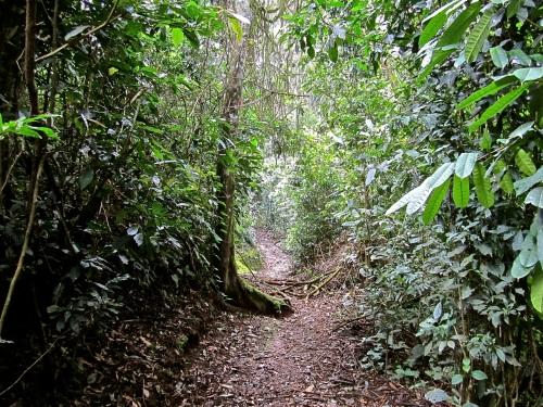 7c Igishigishigi Trail, Nyungwe Park, Rwanda:enclos*ure