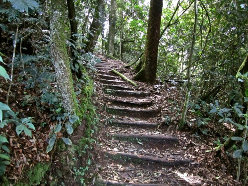 7d Trail steps, Nyungwe Park, Rwanda:enclos*ure