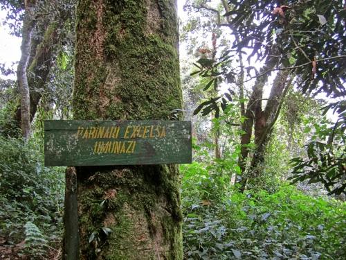 8 Labeled tree, Nyungwe Park, Rwanda:enclos*ure