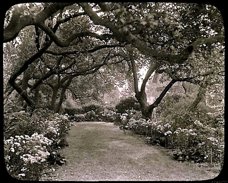 1930 Pasadena garden, Archives of American Gardens, Smithsonian Institution