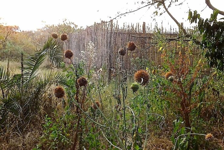 Wildflowers, Ruziz Tented Lodge, Akagera National Park, Rwanda:enclos*ure