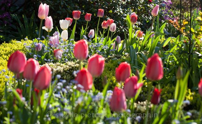 Urban garden by Sibylle Pietrek, Gartenblick/enclos*ure