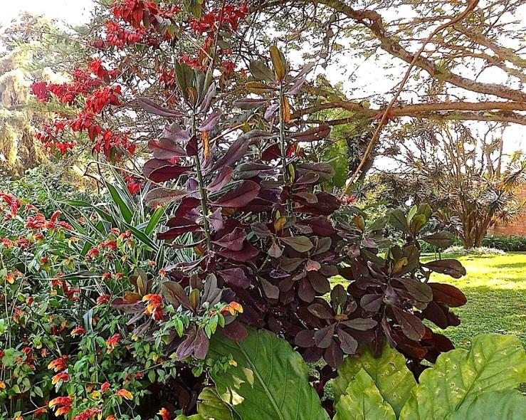 Garden Bloggers' Foliage Follow Up for July, Kigali, Rwanda/enclos*ure