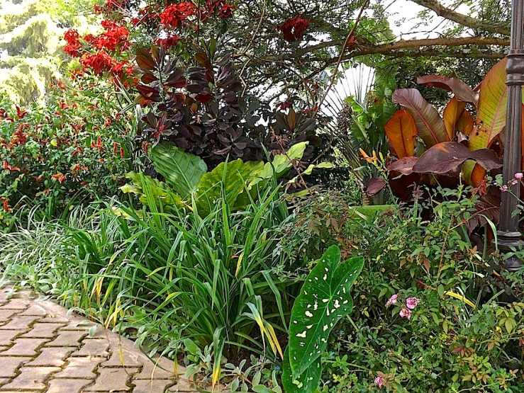 Garden Bloggers' Foliage Follow Up for July, Kigali, Rwanda/enclos*ure