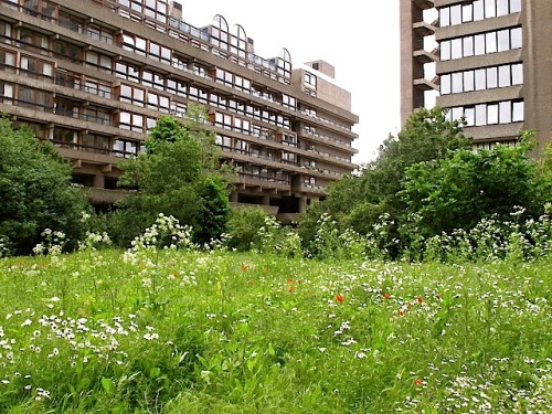 Fann Street Wildlife Garden, a private residents' garden in Barbican Estate, London, by David Hawgood.