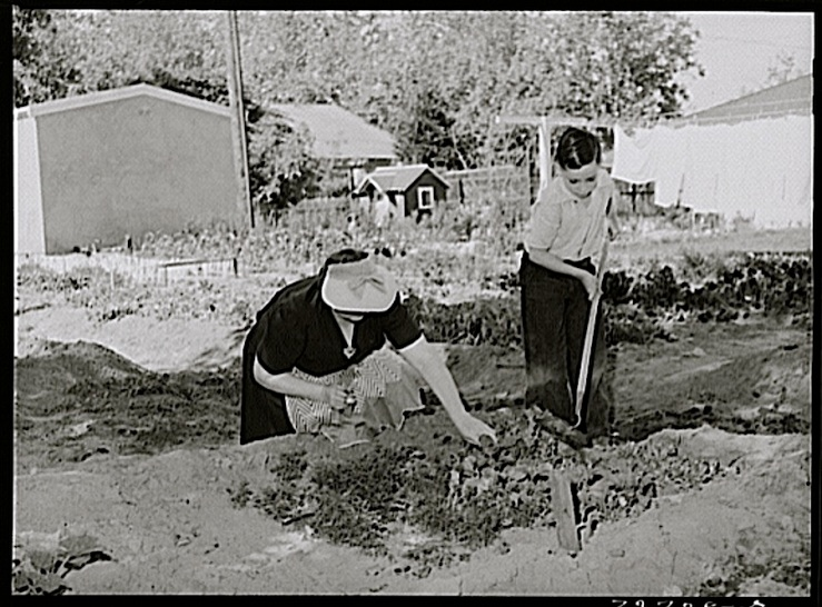 Son's garden, Turlock, CA, 1943, by Russell Lee, Library of Congress