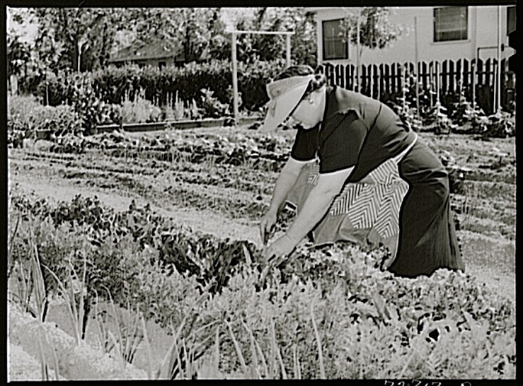Tending the garden, Turlock, CA, 1943, by Russell Lee, Library of Congress