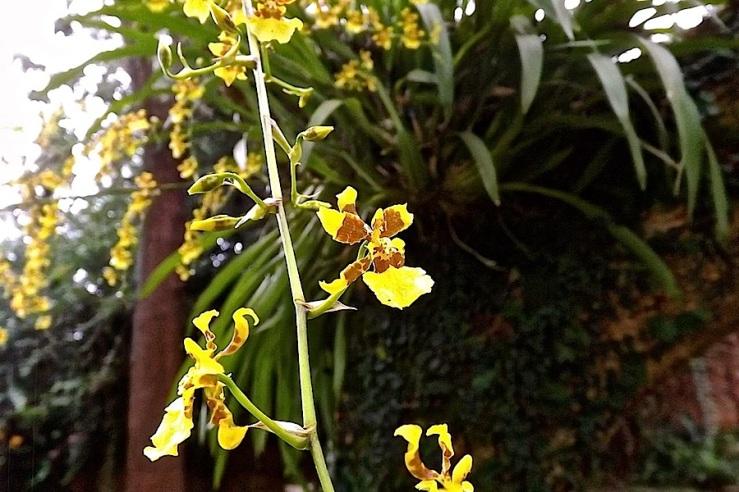 34 orchids