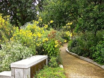 Perennial sunflowers 'Lemon Queen' on the left.
