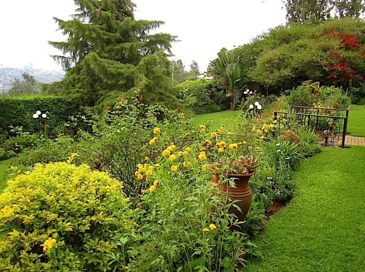 Looking back from the south side of the upper lawn.  There are Rudbeckia laciniata in the foreground.