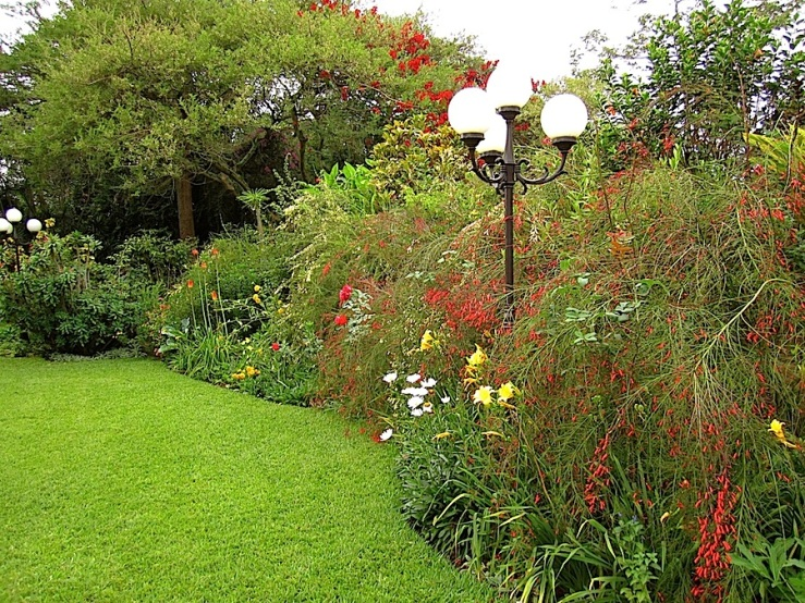 There are Russelia equisetiformis in red and cream, Rudbeckia laciniata, dayllilies, and shasta daisies in this border.