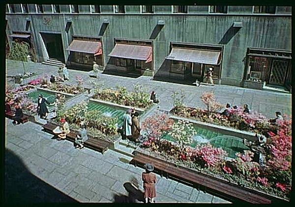 Pink azaleas in Rockefeller Center, NYC, 1945, Gottscho-Schlieisner Collection, Library of Congress:enclos*ure