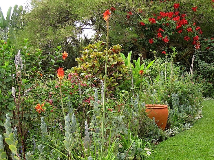 A tall croton in the center, with Kalanchoe daigremontiana, kniphofia, and variegated groundcover irises in the border.