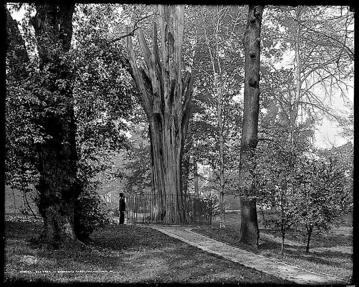 Vintage landscape: Bartram's old tree, c. 1908, Philadelphia, Pa./enclos*ure