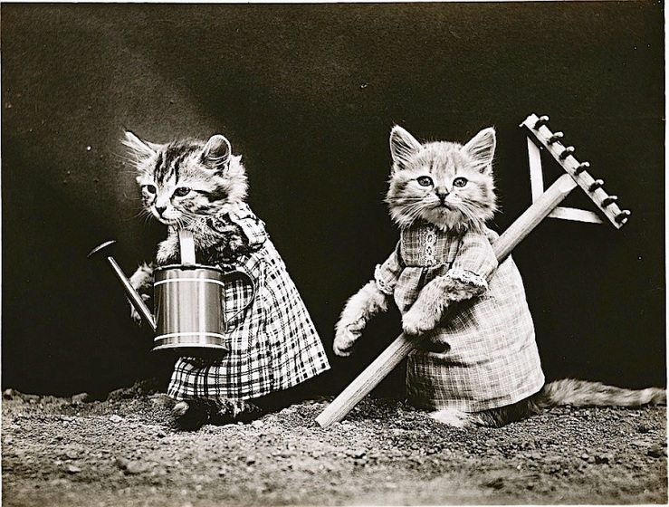 Gardening kittens, c. 1914, by Harry Whittier Frees, via Library of Congress