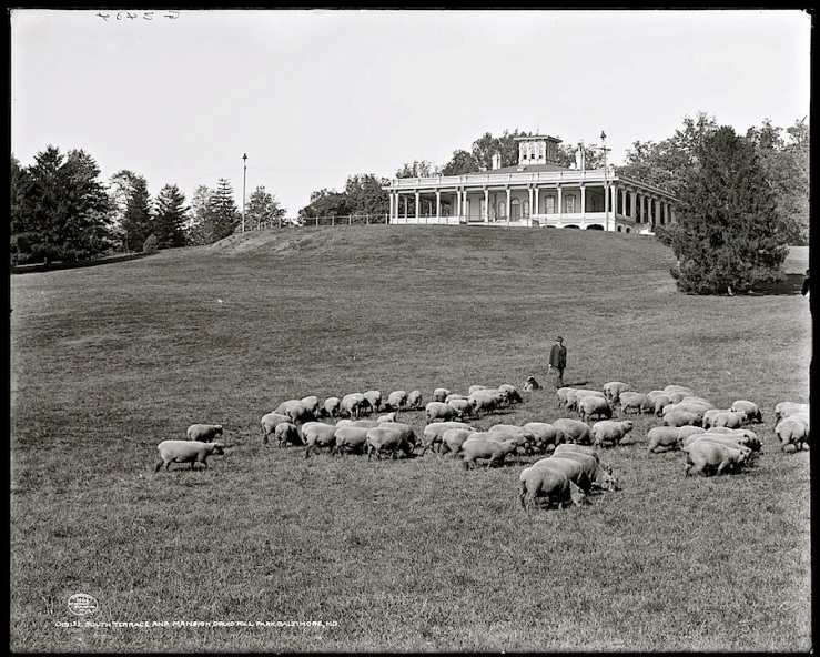 From the 1860s until his retirement in 1926, shepherd George Standish McCleary, cared for the park's grass-cutting herd of Southdown sheep. He was assisted by three Scotch collies.