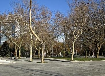 Plane trees at Taksim Square.