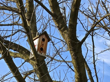 There were two birdhouses in almost every tree from the south end of the Hippodrome to the Hagia Sophia, put there by the neighborhood government.