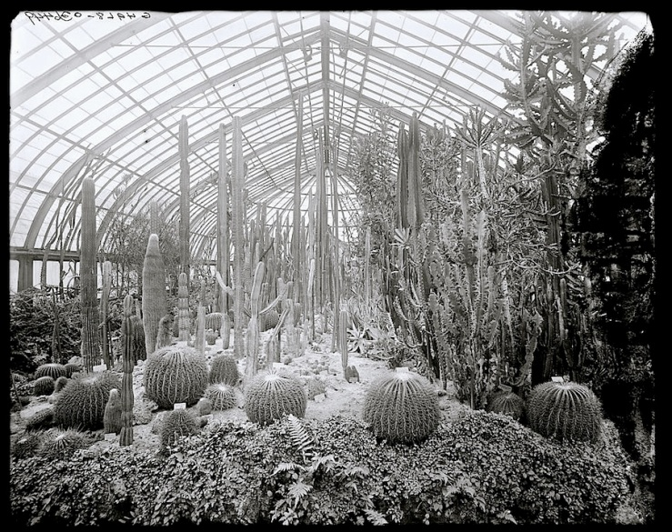 The winter garden/enclos*ure: Cacti House at the Phipps Conservatory in Pittsburgh between 1900 and 1910, via Library of Congress.