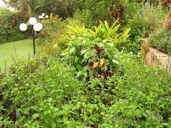 29. Stachytarpheta, a purple crotin (?), Eranthemum nervosum, and a large variegated ginger.