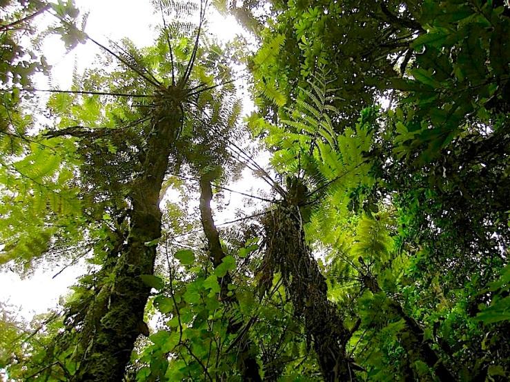 Nyungwe National Park/enclos*ure
