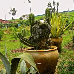 Green Passion plant nursery in Kigali, Rwanda/enclos*ure