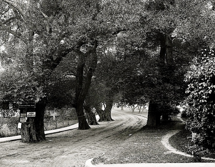 Vintage landscape/enclos*ure: Hawthorne Lane, Mass., early 20th c., via Library of Congress