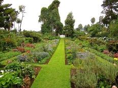 Bloom Day/enclos*ure: Roz Carr garden, Rwanda