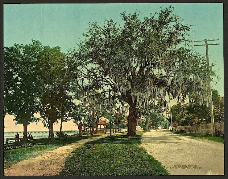 """""""Along the bay, Bay St. Louis,"""" c. 1901, a photo chrome photomechanical print by Detroit Photographic Co., via Library of Congress Prints and Photographs Division."""