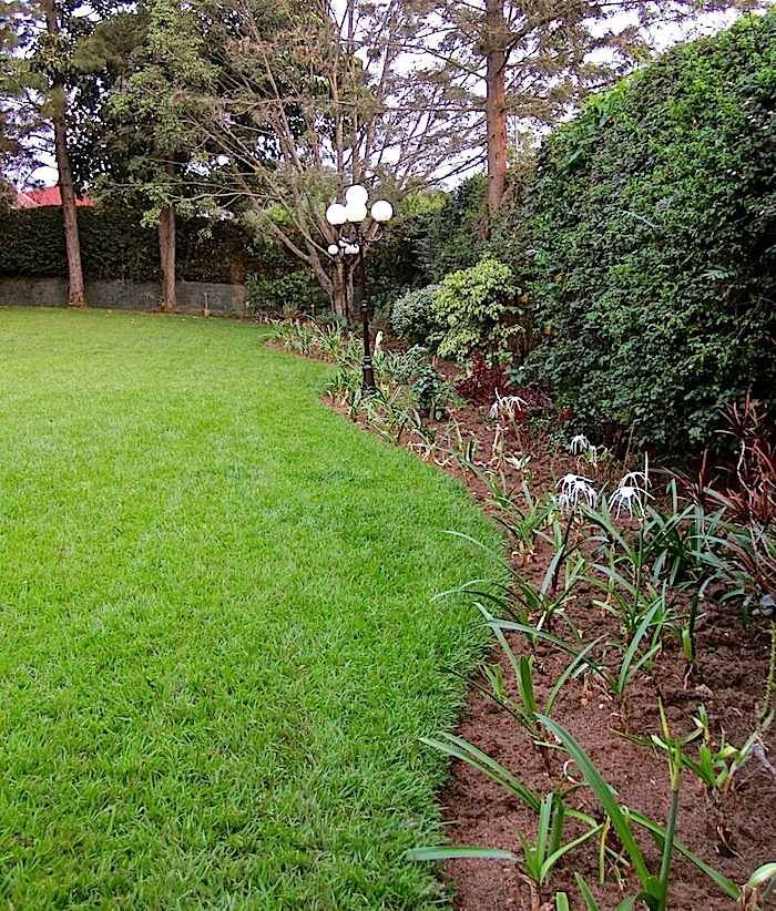 enclos*ure: our Kigali garden, Summer 2012 - lower lawn
