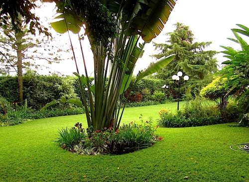 enclos*ure: our Kigali garden, Summer 2014 - lower lawn