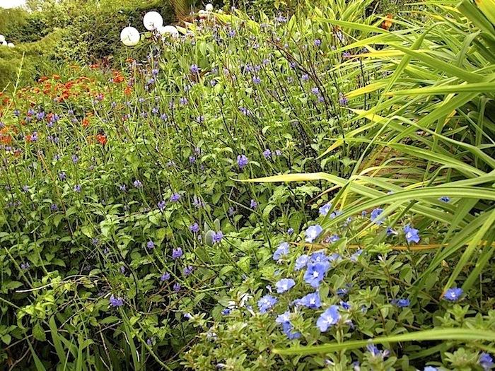 enclos*ure: our Kigali garden, June 2014 - upper lawn