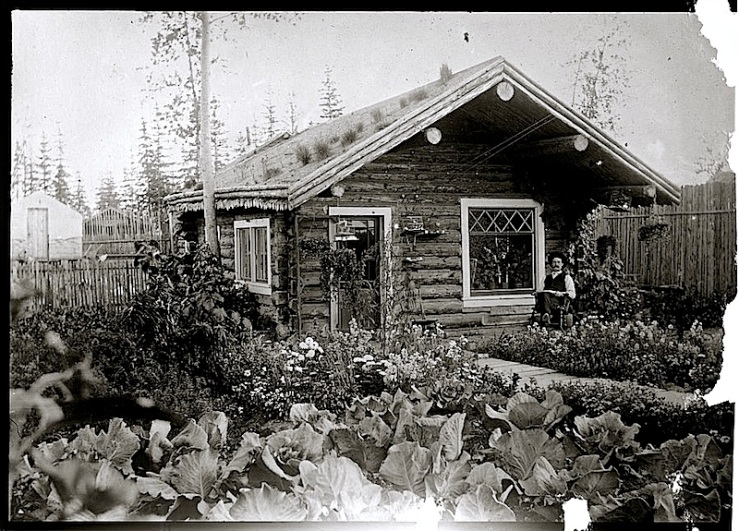 Alaska cabbage garden, via Library of Congress
