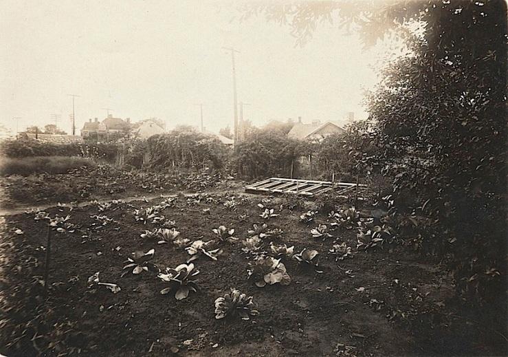 cabbage garden, Maxey Hse, Paris TX, flickr