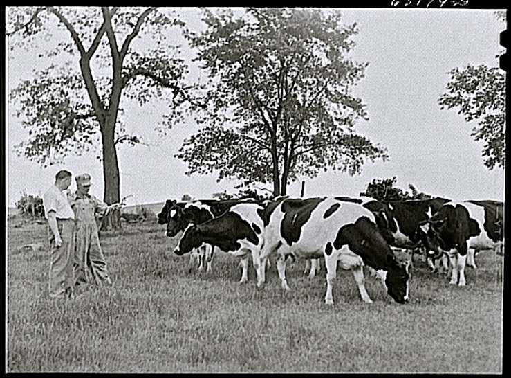 """Mr. Kroenig, community manager, talking with farmer who operates [Greendale] cooperative pasteurizing plant, June1941."