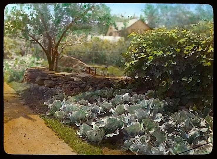 cabbage garden, FBJohnson collection, Library of Congress