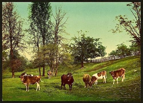 Meadowland, via LoC
