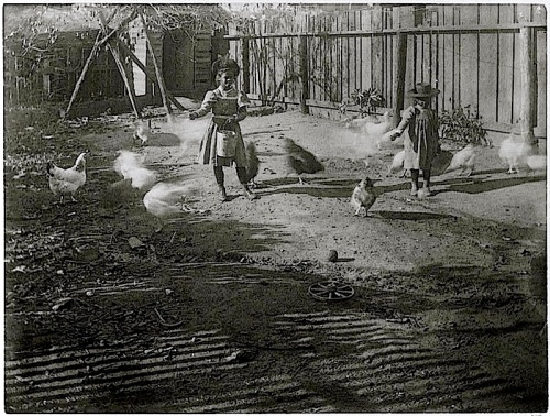 Feeding chickens, ca. 1899 Georgia, Library of Congress