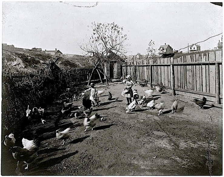 Feeding chickens in ca. 1899 Georgia backyard, Library of Congress