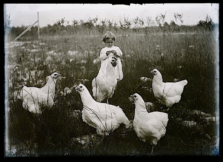 Hugh Magnum chickens, via Duke on flickr