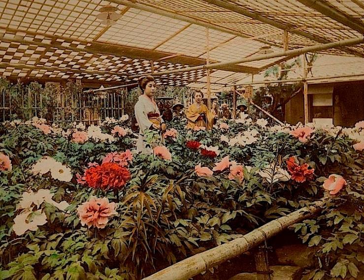 Peony Garden, 1890s, via MOPA