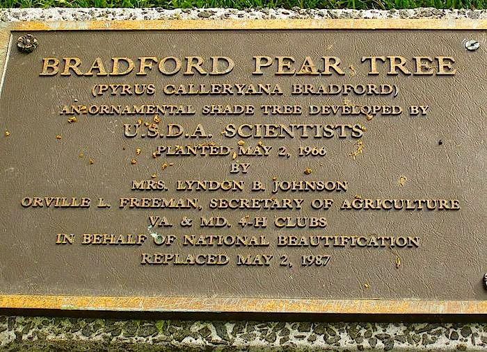 Agr. plaque