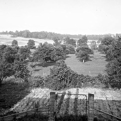 The Berry garden and orchard. Clarence Berry had been a fruit farmer in Selma before he left for the Klondike.