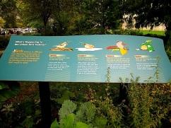 An oasis for urban birds.