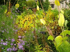 A narrow strip of garden packed with berries and seed heads.