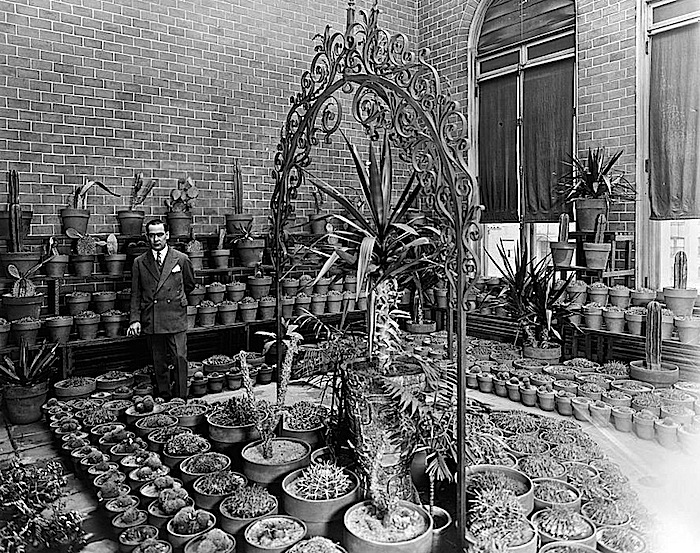 Mexican Embassy cacti, Library of Congress