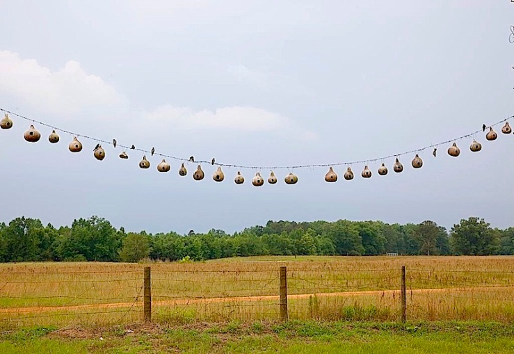 """Purple Martin gourd bird nests in rural Alabama,"" 2010, by Carol Highsmith via Library of Congress Prints and Photographs Division."