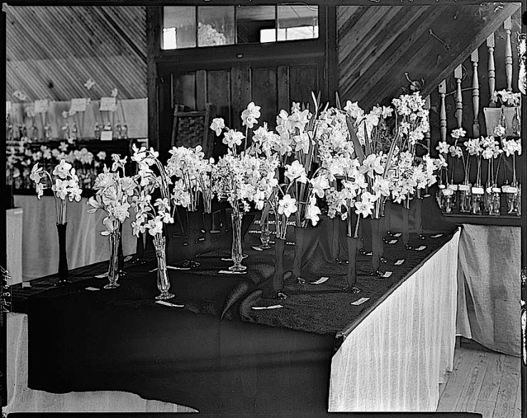 Middleburg, Va., flower show, 1931, Library of Congress