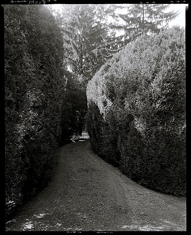 Boxwood hedge, by F.B. Johnston, Library of Congress
